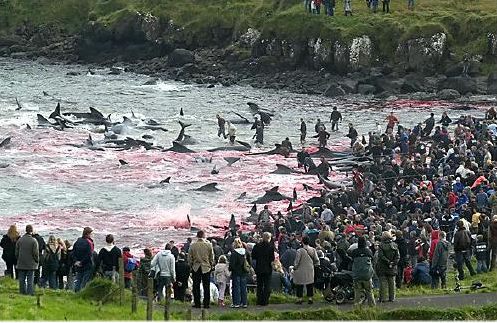 Stop the Senseless Slaughter of Calderon Dolphins « michaeldsellers.